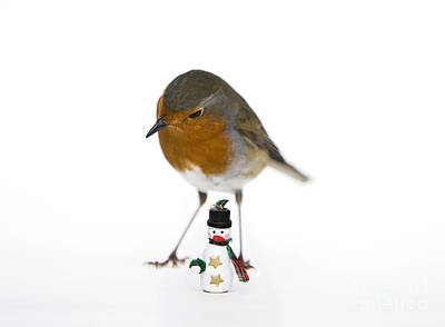 Robin Photograph - Robin And Snowman by Tim Gainey