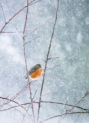 Robin In Snow Print by Rebecca Cozart