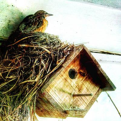 Wren Mixed Media - Robin Nest On Wren House by Patricia Januszkiewicz