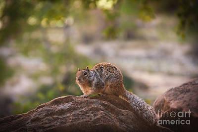 Rock Squirrel In Zion Print by Robert Bales