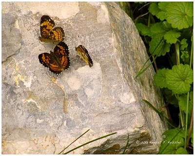 Checkerspot Photograph - Rock Trio by Kendall Kessler
