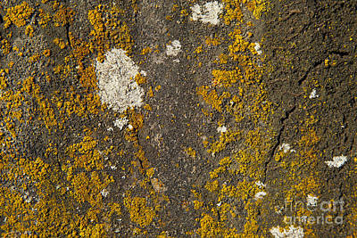Rock With Lichen Original by Graham Foulkes