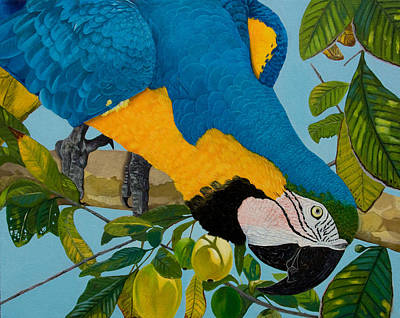 Blue And Gold Macaw Painting - Rocky by Manuel Lopez
