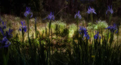 Irises Digital Art - Rocky Mountain Irises by Ellen Heaverlo