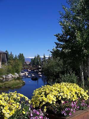 Colorado Mountains Photograph - Rocky Mountain Summer Life by Michael J Bauer