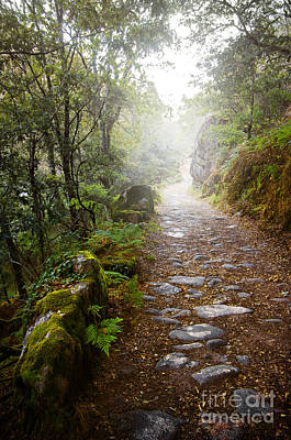 Rain Photograph - Rocky Trail In The Foggy Forest by Carlos Caetano
