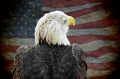 American Bald Eagle Print by Steven  Michael