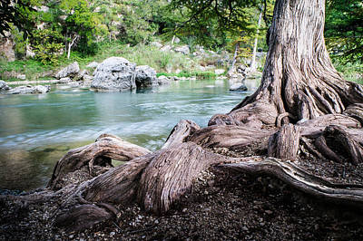 Rolling Roots Of A Bald Cypress - Texas Print by Ellie Teramoto