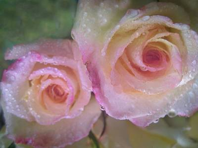Photograph - Romance 1 by Shirley Sirois