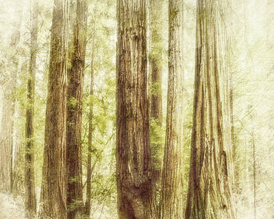 Romantic Forest Muir Woods National Monument California Print by Marianne Campolongo