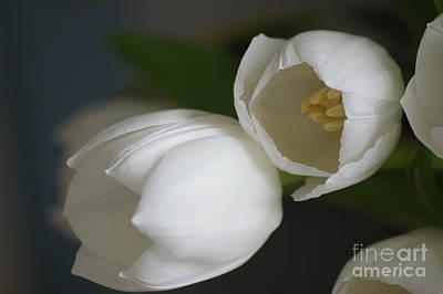 Romantic White Print by Carol Lynch