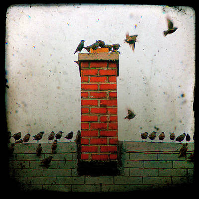 Starlings Digital Art - Roof Top Hoppers by Gothicrow Images