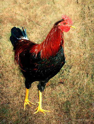 Rooster Red Art Textured Print by Lesa Fine