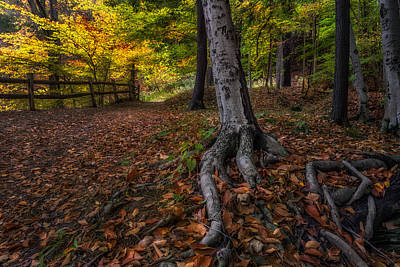 Autumn Photograph - Rooted by Mark Papke