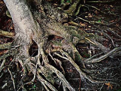 Roots Original by Joy Nichols