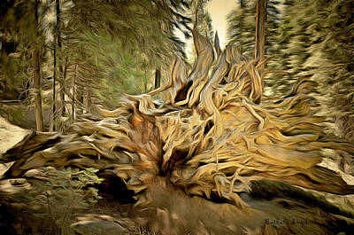 Roots Of A Fallen Giant Sequoia Print by Barbara Snyder