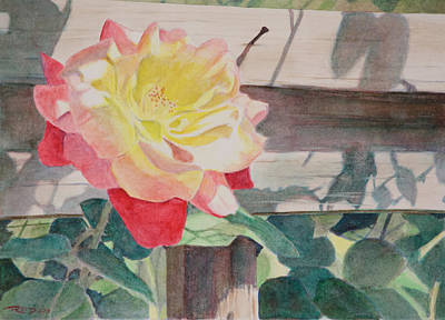 Watercolor Painting - Rose Aglow by Christopher Reid