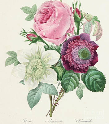 Rosebud Painting - Rose Anemone And Clematis by Pierre Joseph Redoute