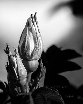 Relaxation Photograph - Rose Bud by Bob Orsillo