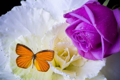Rose Butterfly With Kale Print by Garry Gay