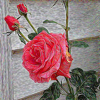 Rose Impressionist Study Print by Paul Gioacchini