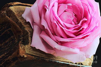 Roses Photograph - Rose In An Old Book by Amanda Mohler