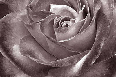 Floral Abstract Photograph - Rose In Black And White by Ben and Raisa Gertsberg