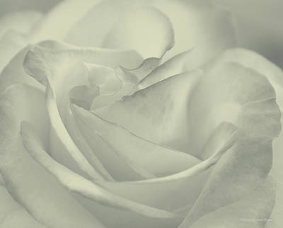 Silver Photograph - Rose Of My Heart by  The Art Of Marilyn Ridoutt-Greene