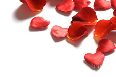 Rose Photograph - Rose Petals And Hearts On White Background by Michal Bednarek