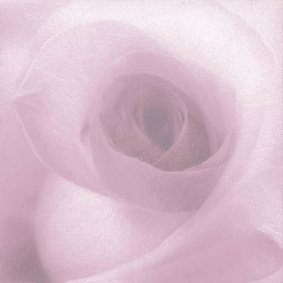 Rose Pink On White Original by Tony Rubino