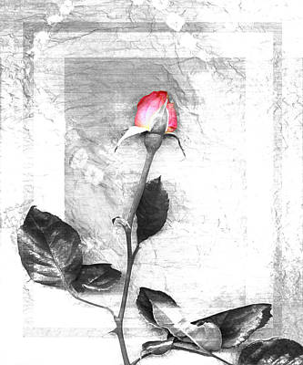 Mother Photograph - Rose Red One by Linda Mears