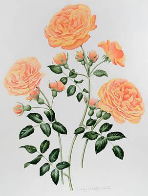 Rosebud Painting - Rose St Richard Of Chichester  by Sally Crosthwaite