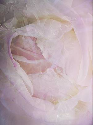 Rose Study 4 Print by Shirley Sirois
