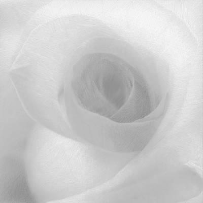 Rose White On White Original by Tony Rubino