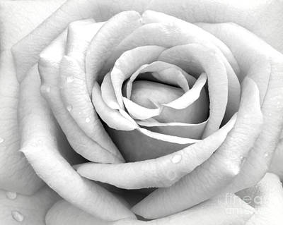 Op Art Photograph - Rose With Tears by Sabrina L Ryan