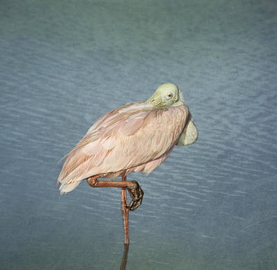 Spoonbill Photograph - Roseate Spoonbill by Kim Hojnacki