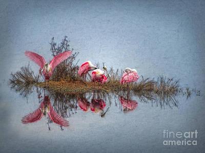 Spoonbill Digital Art - Roseate Spoonbills At Rest by Lianne Schneider