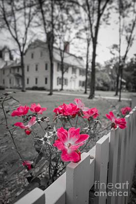 Deerfield Photograph - Roses Along A Picket Fence Deerfield Massachuesetts by Edward Fielding