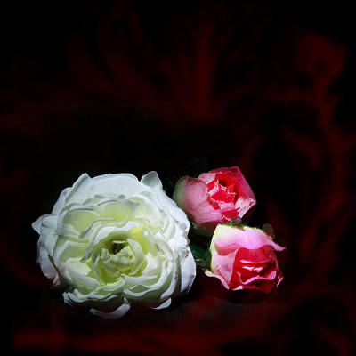 Roses Print by Cecil Fuselier