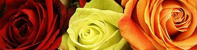 Amature Photograph - Roses Of Different Colors by Bruce Bley
