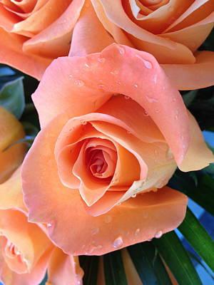 Roses Print by Paula Brown