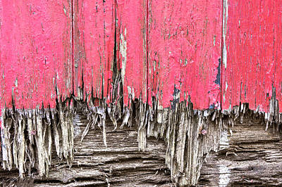 Messy Photograph - Rotten Wood by Tom Gowanlock