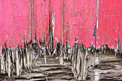 Rotten Wood Print by Tom Gowanlock