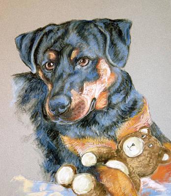 Rottweiler Dog Print by Barbara Lightner