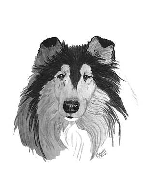 Rough Collie Headstudy Original by Virginia Cleary