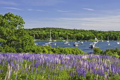 Coastal Maine Photograph - Round Pond Lupine Flowers On The Coast Of Maine by Keith Webber Jr