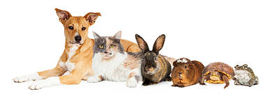 Row Of Domestic Pets Print by Susan Schmitz