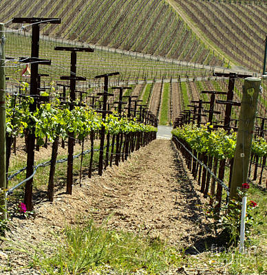 Wine Photograph - Rows by Leslie Reitman