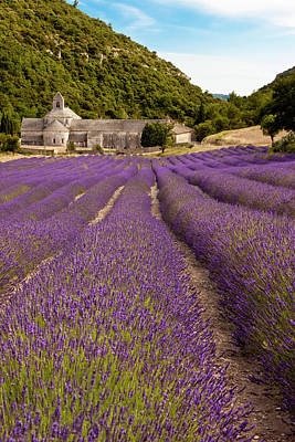 Rows Of Lavender Leading Print by Brian Jannsen