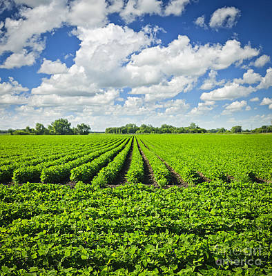 Rows Of Soy Plants In Field Print by Elena Elisseeva